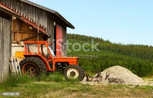 istock Reindeer on pile of sand near old tractor 495758249