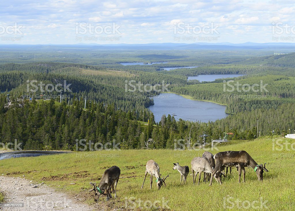 Reindeer on top of a hill stock photo