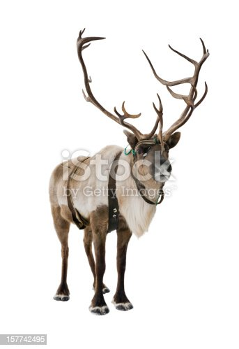 Beautiful brown reindeer isolated on white background