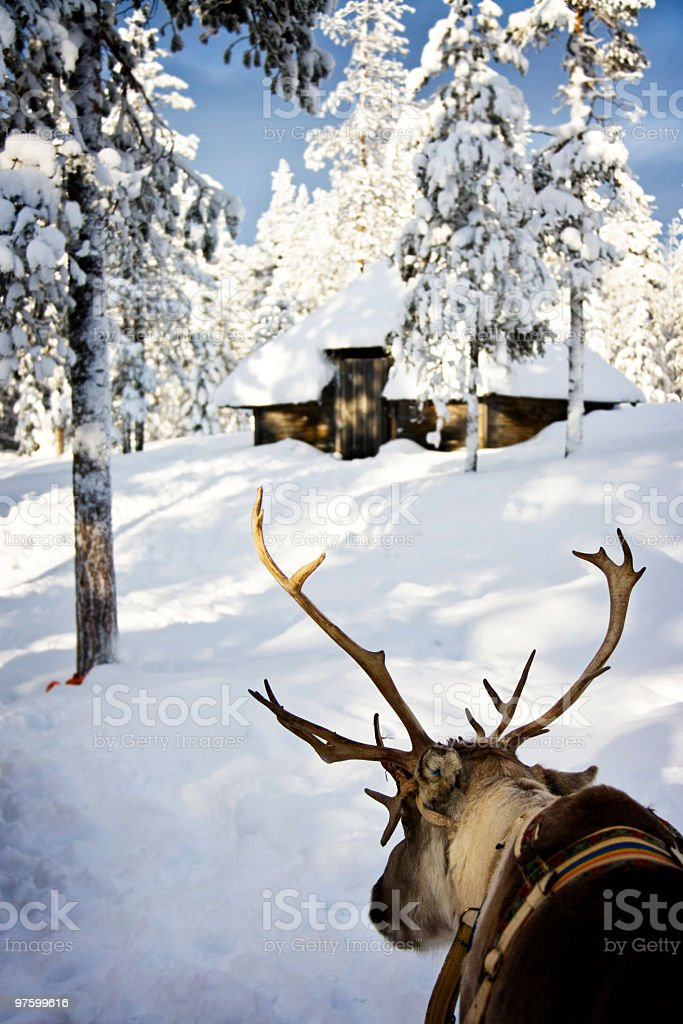 Reindeer Parked Outside Hut royalty-free stock photo