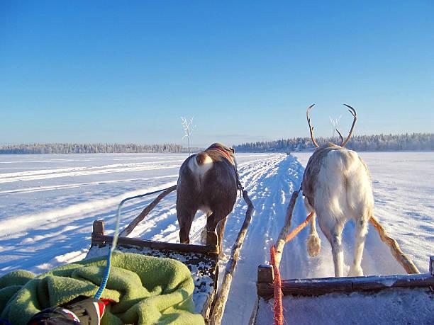 reindeer ride stock photo
