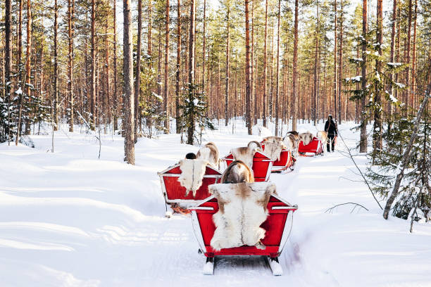 Reindeer sled in Finland Lapland winter stock photo