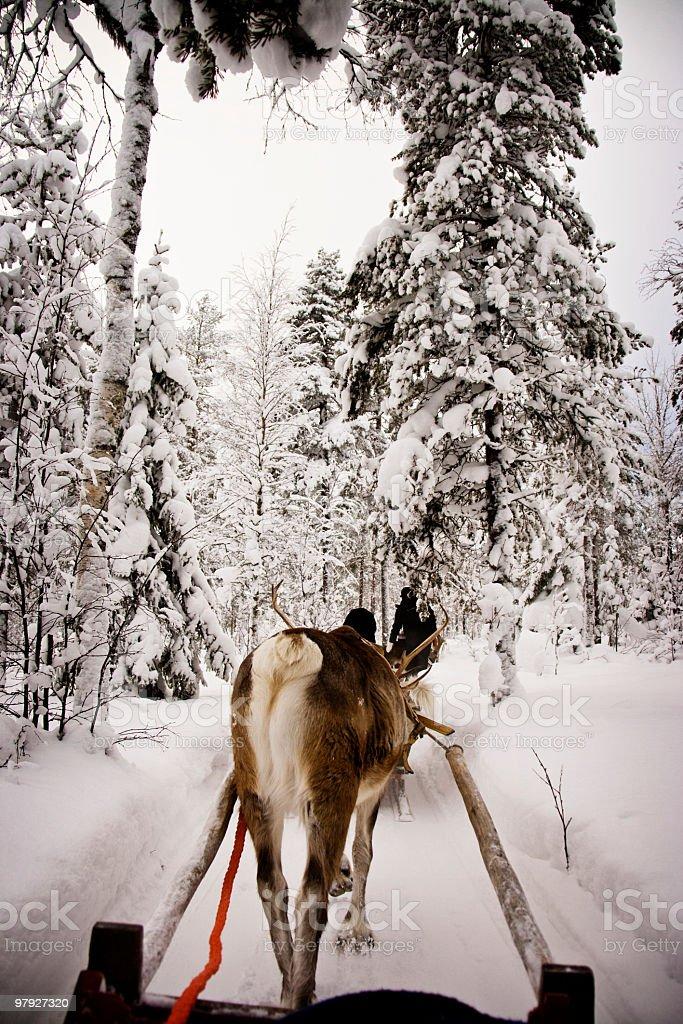 Reindeer Sleigh Ride royalty-free stock photo