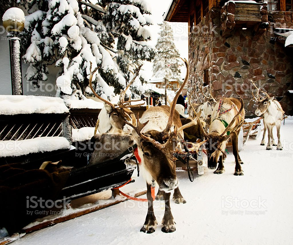 Reindeer Tours royalty-free stock photo