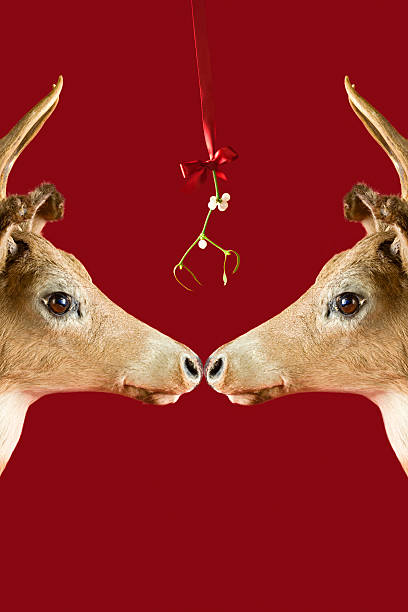 Reindeer underneath mistletoe stock photo