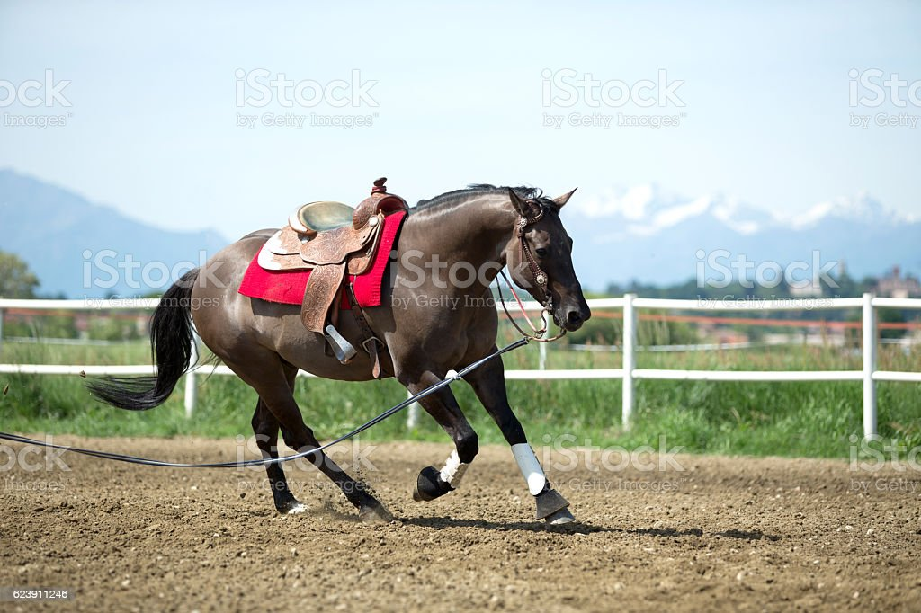Reining Horse in action stock photo