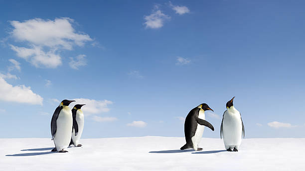 Rejection Emperor Penguin gets rejected by another emperor Penguin emperor penguin stock pictures, royalty-free photos & images