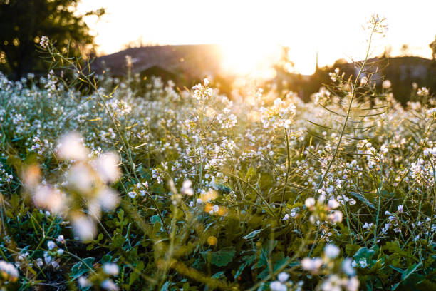 Relax at nature during the sunset. Flowers grass and trees, spring peaceful scene. stock photo