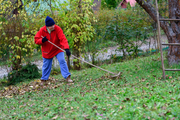 Relax by work in the village while raking the yellow leaves in autumn stock photo