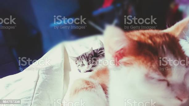Relax cat picture id864757338?b=1&k=6&m=864757338&s=612x612&h=rexlp6etmaunozzzqq9paw7jvby4to6ps4n5xunsfjw=