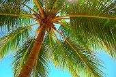 Relax in Tropical paradise, Just below coconut palm tree shadow