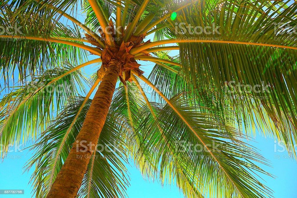 Relaxe em um paraíso Tropical, logo abaixo sombra de palmeira de coco - foto de acervo