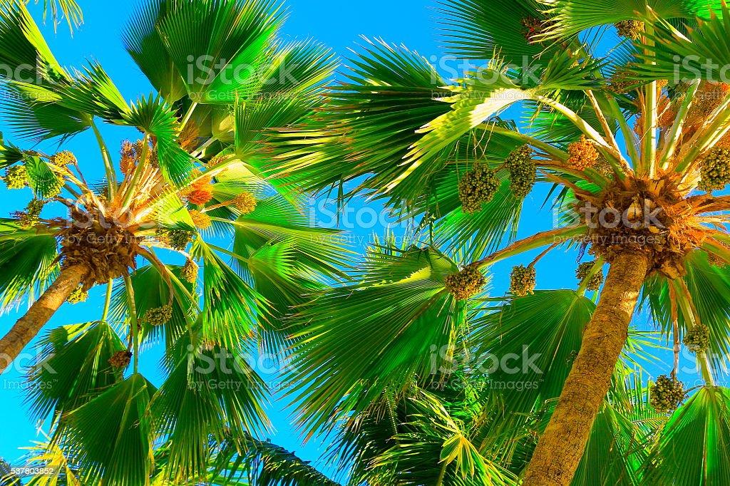 Relaxe em um paraíso Tropical, logo abaixo sombra de palmeiras - foto de acervo