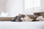 istock relaxed beautiful tabby cat lying on bed 1204373358