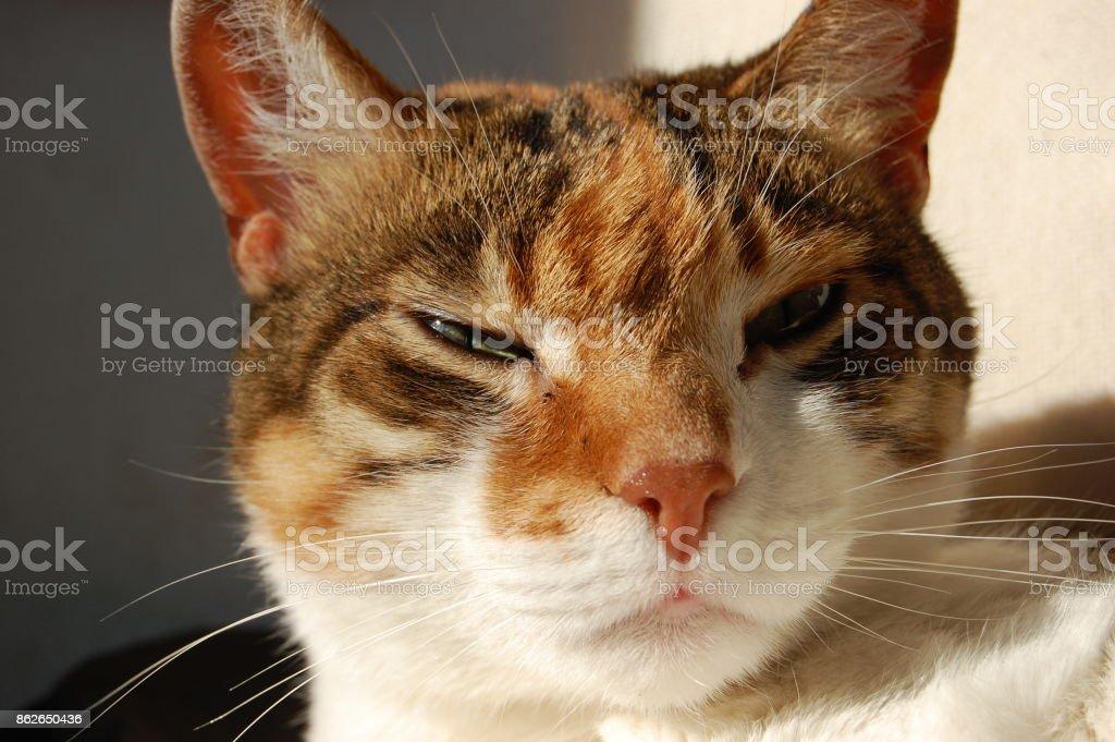 Gato relaxado no sol - foto de acervo