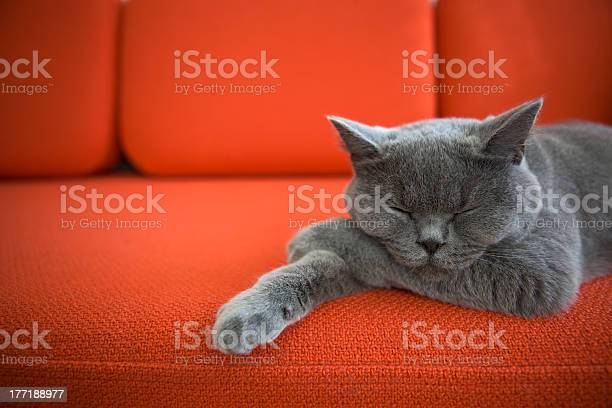 Relaxed cat picture id177188977?b=1&k=6&m=177188977&s=612x612&h=d6czmyeagfy1gfhctd9qwvszaqytot6lbrfr0lyjvwq=