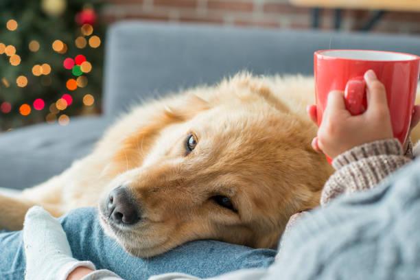 Relaxed dog picture id842389054?b=1&k=6&m=842389054&s=612x612&w=0&h=jazjovsj9l4bpujpn9lutb4djnb3 iso8cmd n2ecnc=