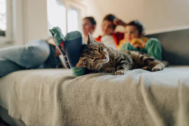 Entspannen zu Hause – Foto
