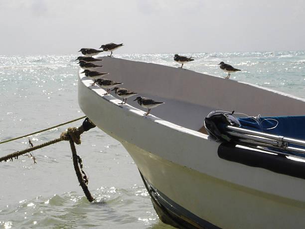 relaxing birds on a fishing boat - fsachs78 stockfoto's en -beelden