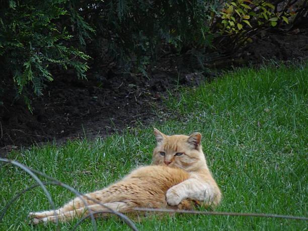 Relaxing cat picture id525894985?b=1&k=6&m=525894985&s=612x612&w=0&h=dwq4t8zuw4pygnhpwfkjzreprxbl8lqaae37u10ayeq=