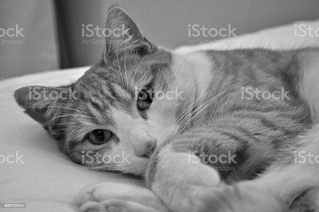 Relaxing Cat stock photo
