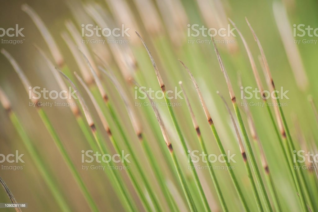 Relaxing Green Grass Background Nature Wallpaper Stock Photo