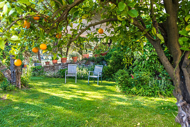 Relaxing in beautiful garden with Chairs stock photo