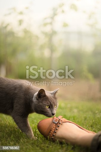 istock Relaxing in the grass with cat 538766362