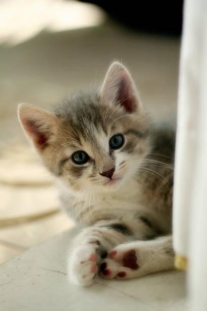 Relaxing Kitten stock photo