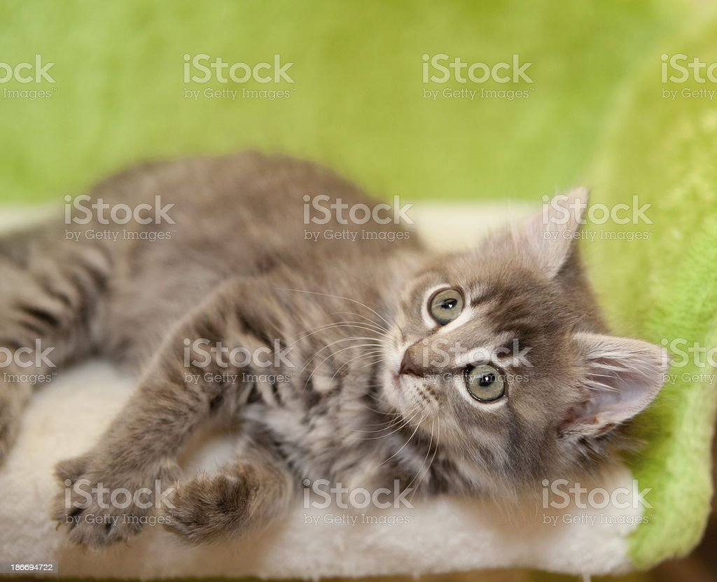 relaxing kitty stock photo