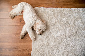 istock Relaxing on the Rug 958868492