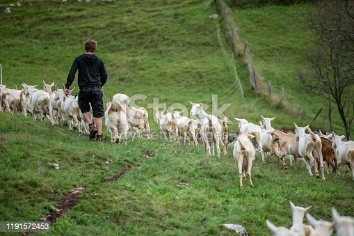 1094815168 istock photo Relaxing Portrait of Young Man Herding Large group of Goats with his Shepherd Dog - stock photo 1191572453