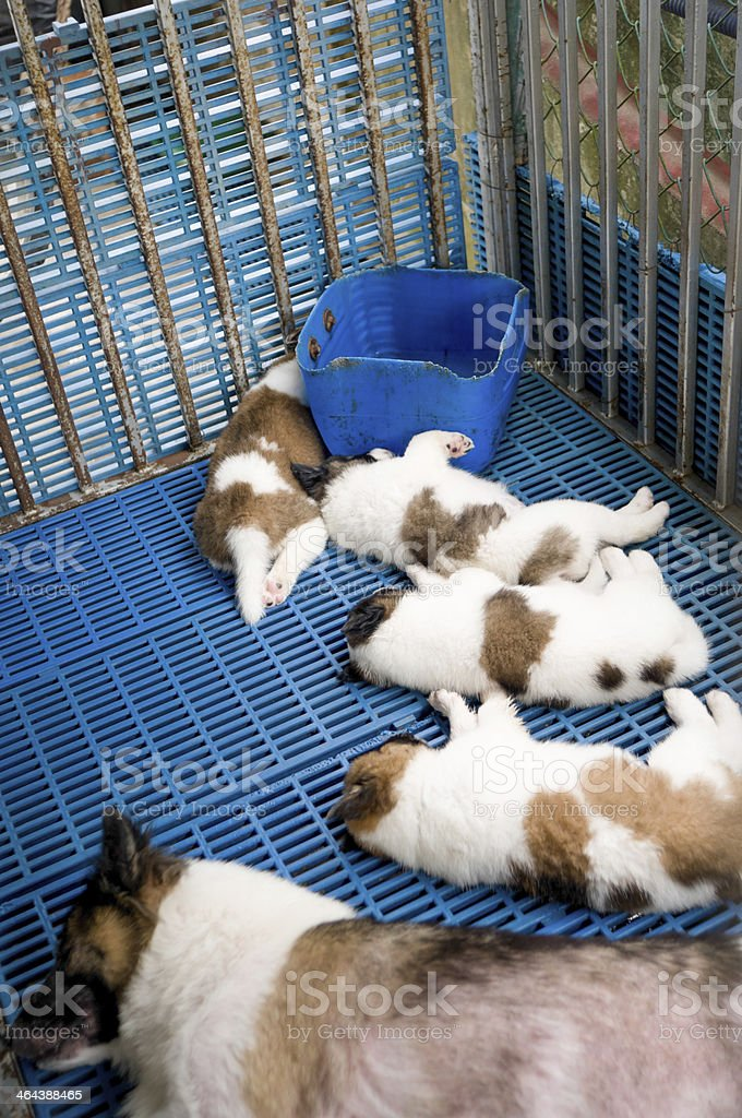 Relaxing puppy royalty-free stock photo
