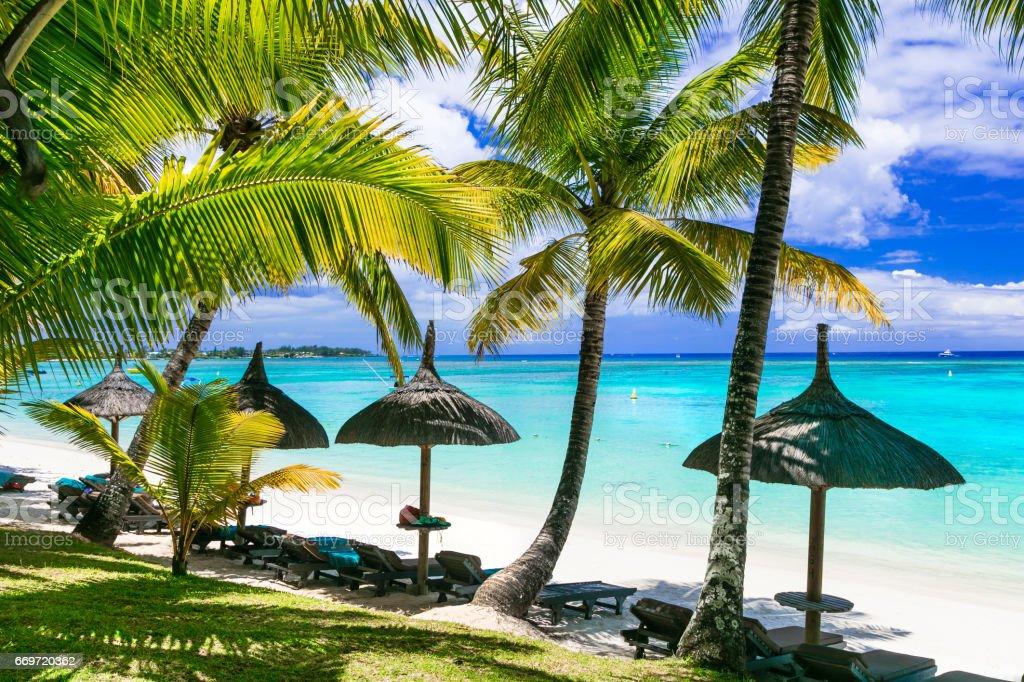 Relaxing tropical scenery -beauti palm beach in Mauritius island stock photo