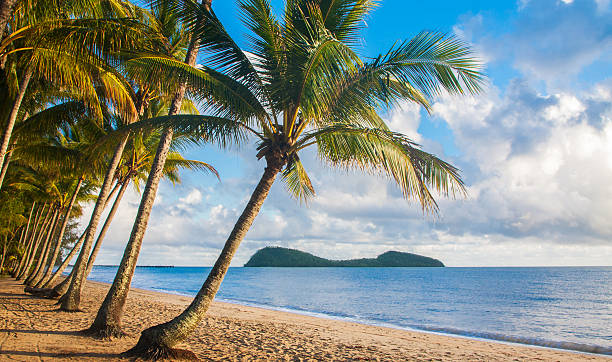 A relaxing view of a tropical beach with palm trees A beautiful tropical beach with palm trees at sunrise in northern Australia bay of water stock pictures, royalty-free photos & images