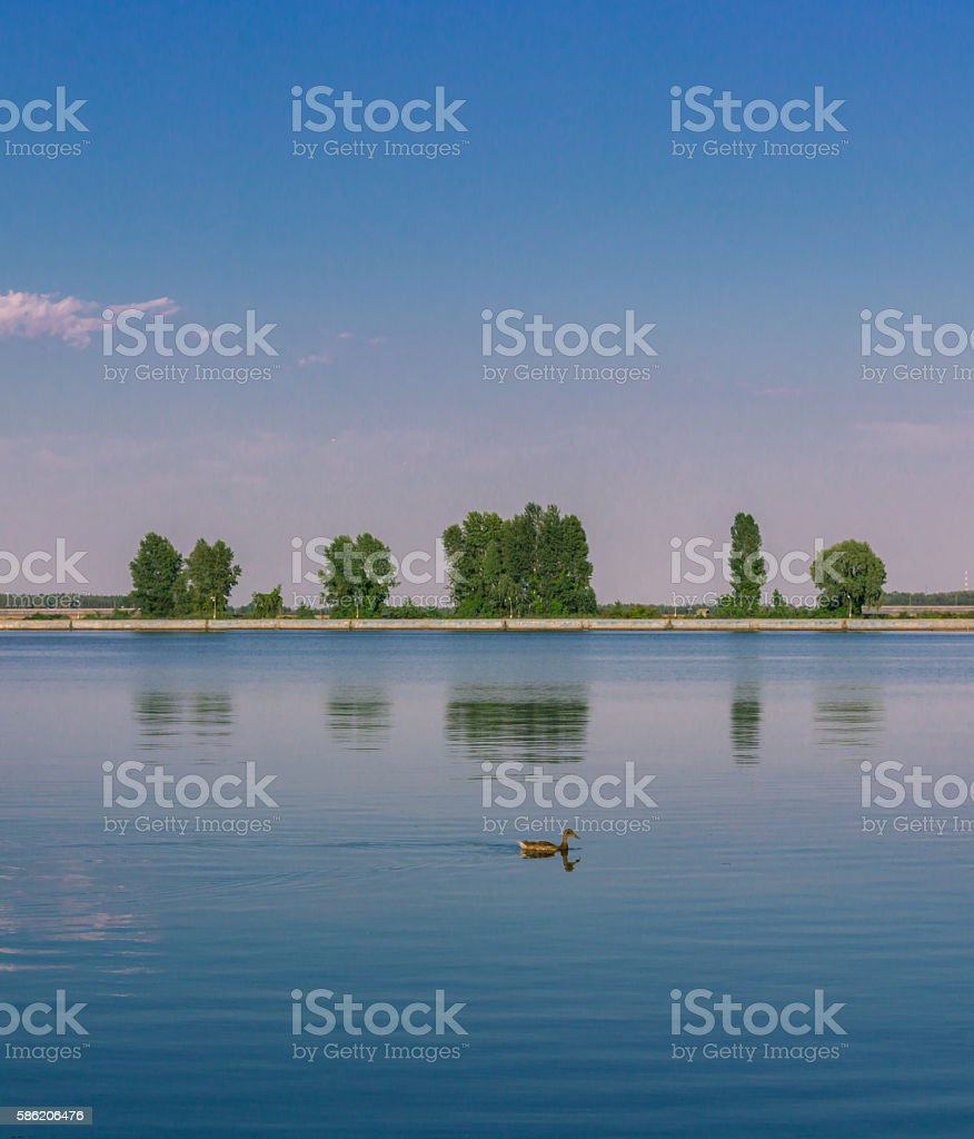 Relaxing water landscape with duck and trees reflections stock photo