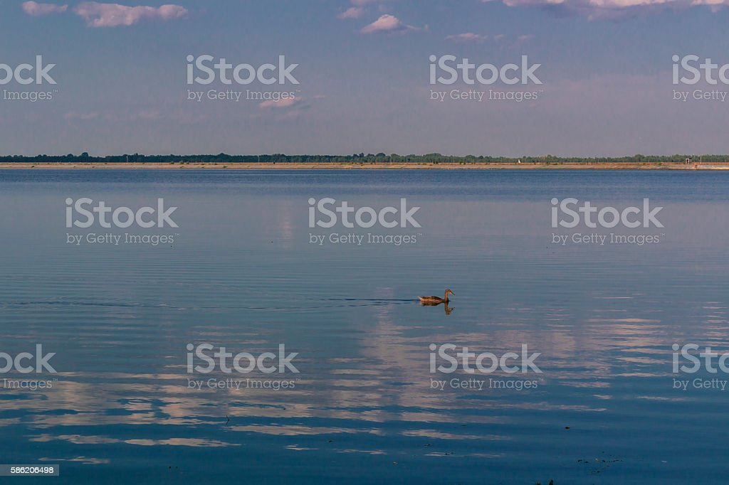 Relaxing water landscape with lonely duck and clouds reflection stock photo