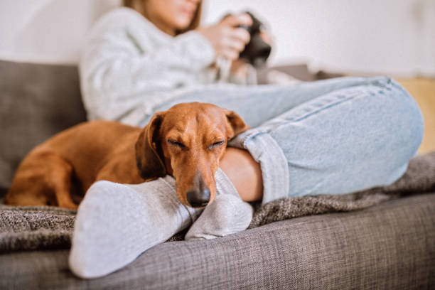 relaxing with her dachshund dog - canide foto e immagini stock