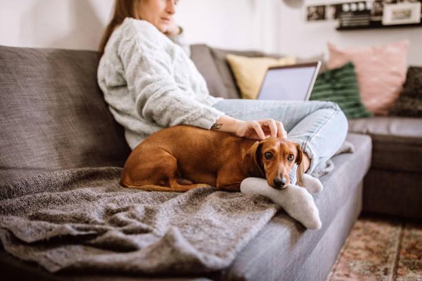 Relaxing with her dachshund dog picture id1168474984?b=1&k=6&m=1168474984&s=612x612&w=0&h=1d diyjov0qju1fqhktznbhx d4 bh7ynq1ffge5jti=