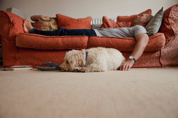 relaxing with the dog - sloth stock pictures, royalty-free photos & images