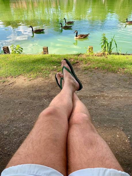 Relaxing with the geese. stock photo