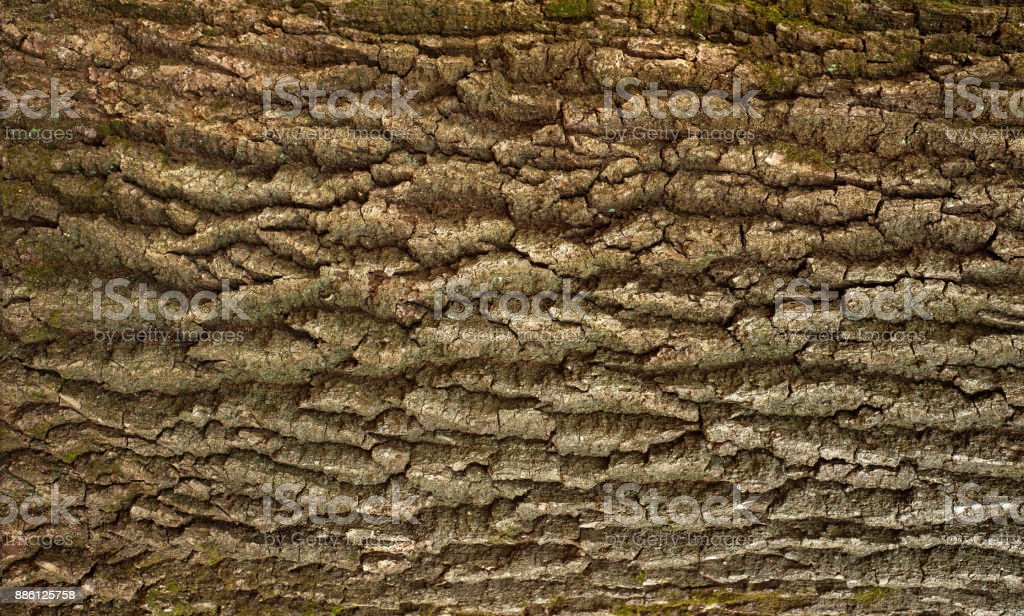 Relief texture of the brown bark of a tree with green moss and lichen on it. stock photo