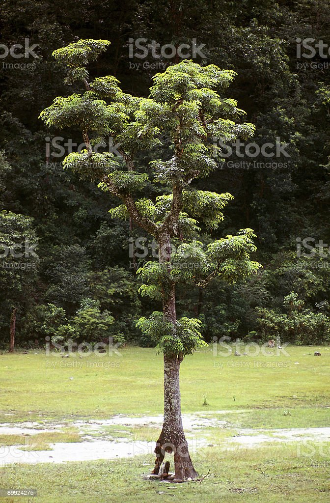 Religious, ascetic hindu sitting under a tree in India royalty-free stock photo