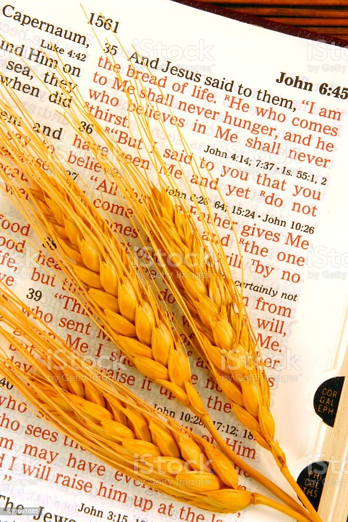 Religious: I Am the Bread Bible scripture with wheat heads stock photo