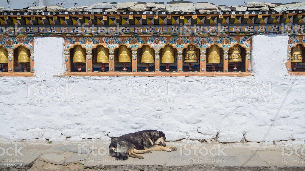 Religious prayer wheels and dog in Bhutan stock photo