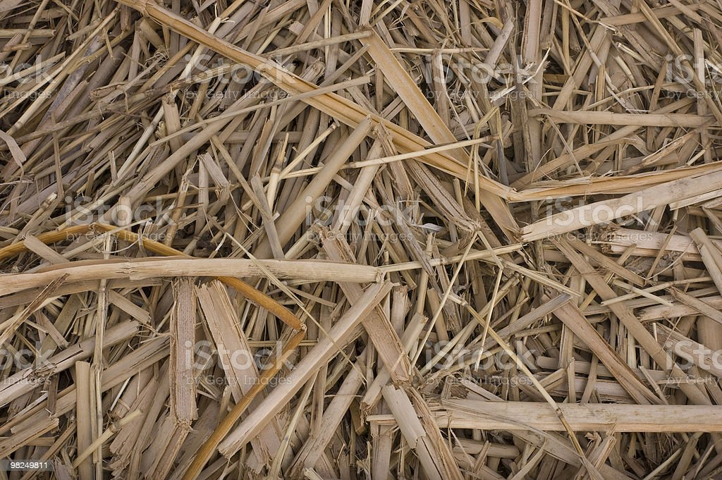remainder of the bulrush royalty-free stock photo