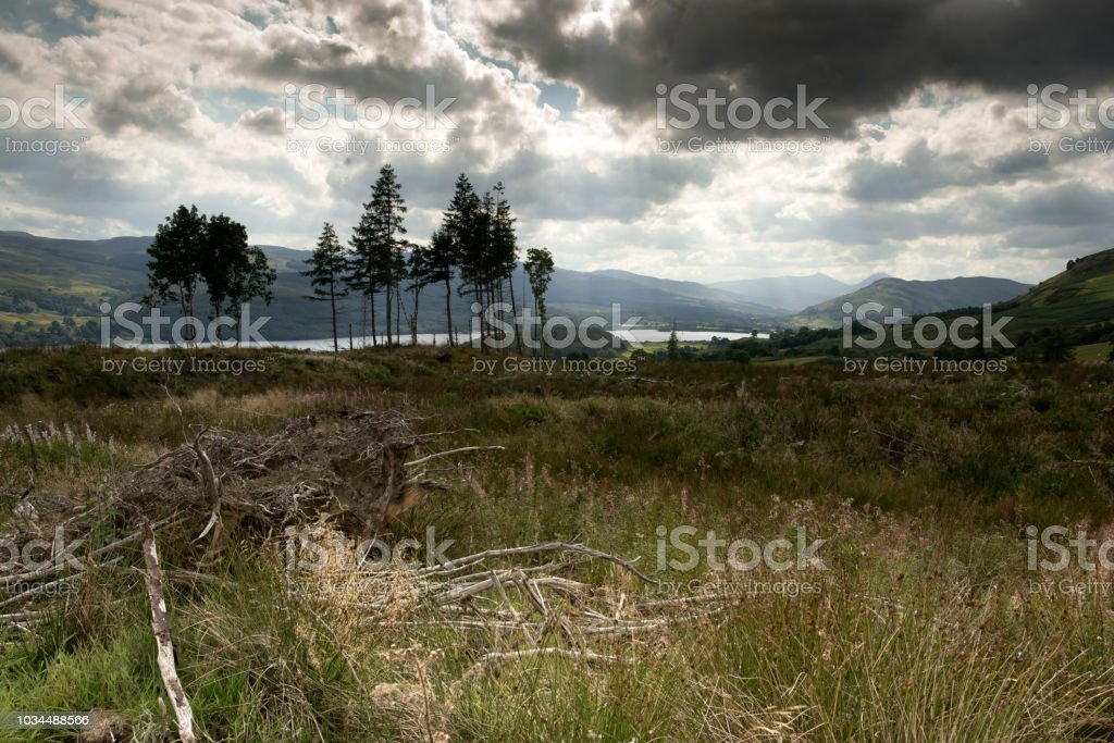 Remains of Forestry by Loch Tay in Scotland stock photo
