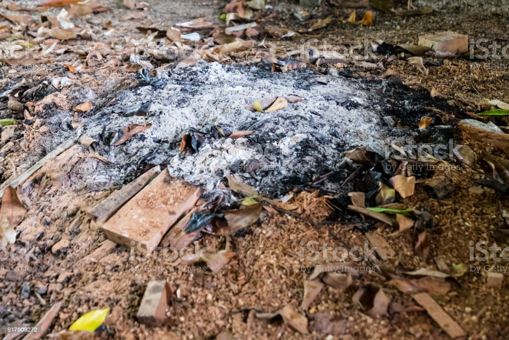 Remains Of Wood Coal And Ashes After The Combustion Of