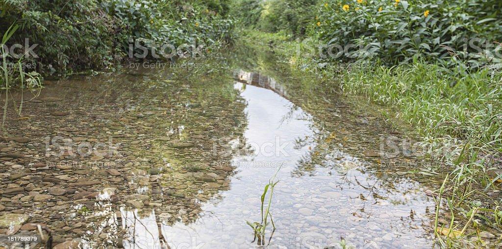 Remanso en el bosque royalty-free stock photo