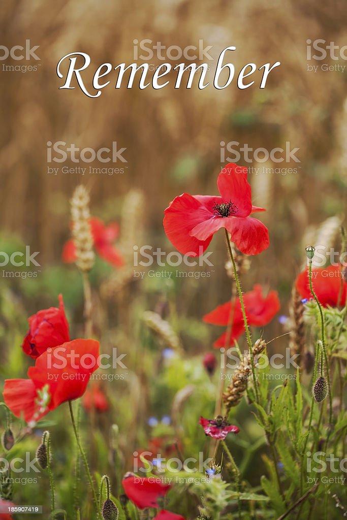 Rememberance Day - Wild Poppies stock photo